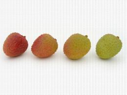 Litchi, coloration, différents niveaux de gradation