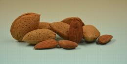 Ferraduel, variété d'amande