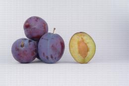 Variété de prune  : President