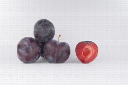 Variété de prune : Primetime