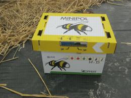 Une ruche de bourdons dans une parcelle de fraisiers