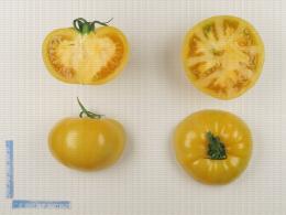 Variété de tomate de type ancien côtelé jaune, en coupe