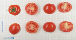 Tomate grappe en coupe