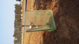 Mise en place d'une protection sur un  nouveau verger planté