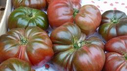Banc de marché : tomates. Bergerac, printemps 2016