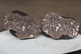 Truffe - Coupe longitudinale de Tuber melanosporum avec son entrelas de veines stériles