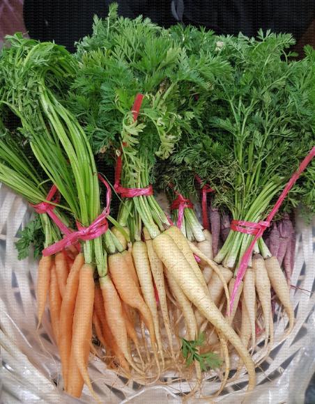 Bottes de carottes de différentes couleurs en corbeille