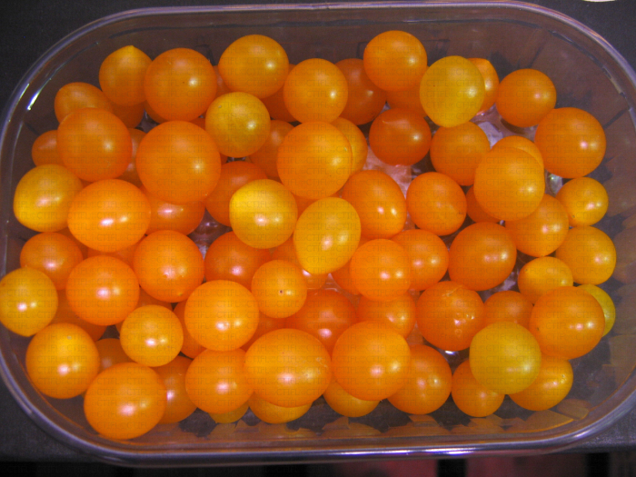 Tom Berry orange, variété de tomate miniature