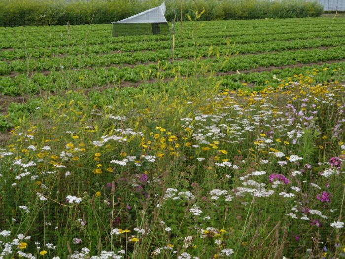 Parcelle biodiversité CTIFL Carquefou