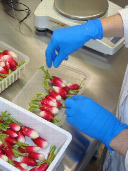 Conditionnement radis roses 4ème gamme