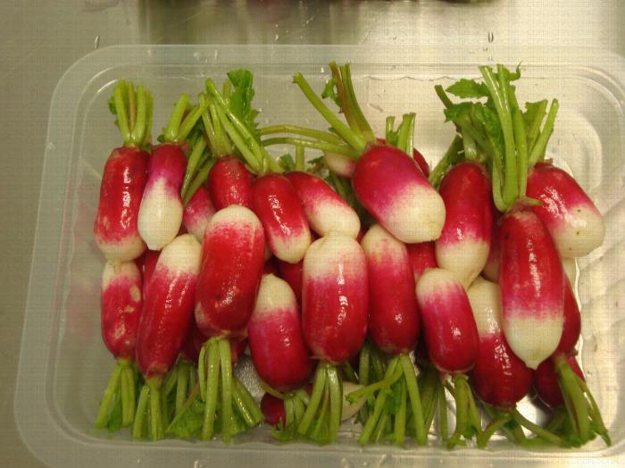 Barquette de radis roses 4ème gamme