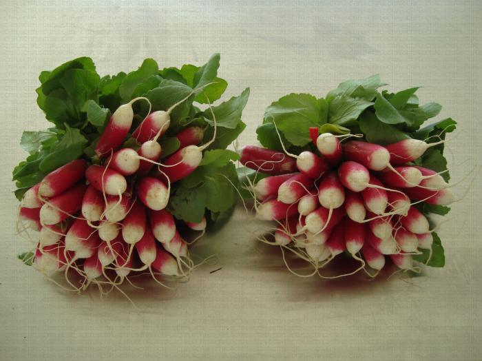 Bottes de radis roses