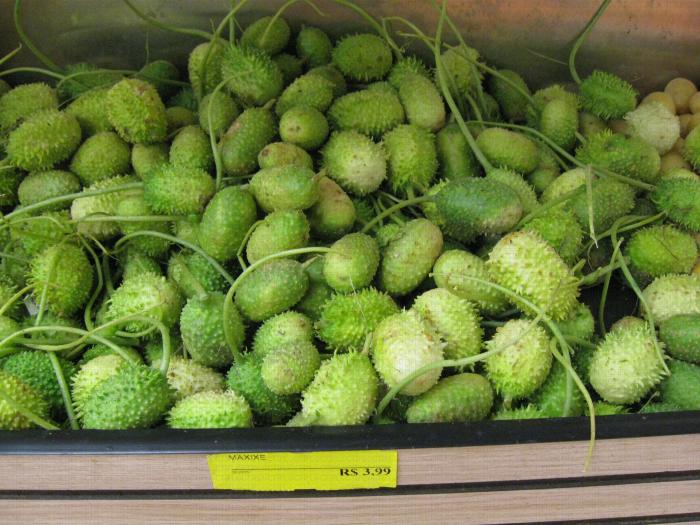 Maxixe ou Bur Cucumber du Brésil - Curcubitacées