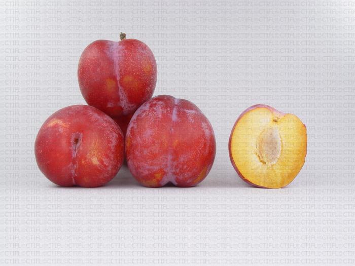 Variété de prune : Ozard
