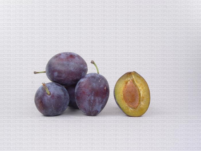 Variété de prune : Quetsche