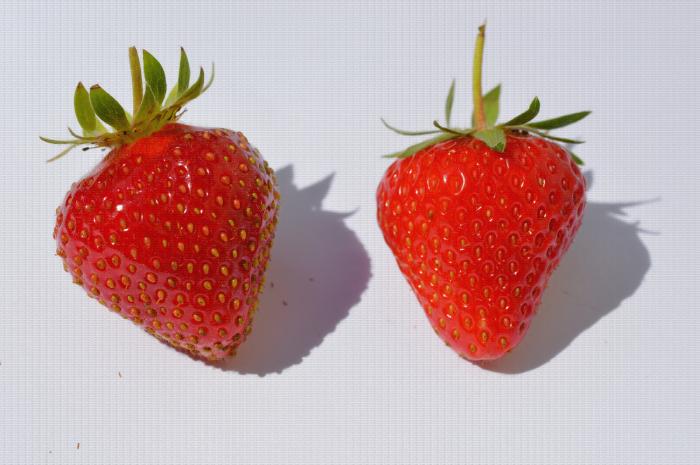 Comparaison de deux fraises une aux akènes enfoncés et l'autre aux akènes saillants