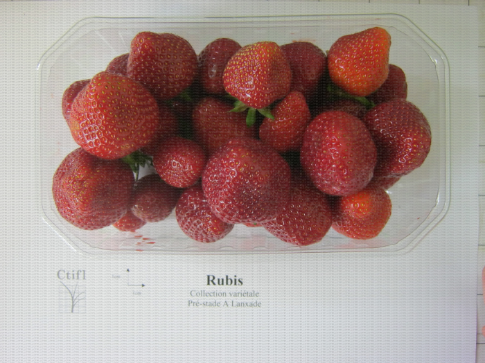 Présentation en barquette de la variété de fraise Rubis des jardins