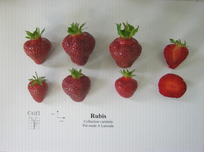 Présentation de fraises, variété Rubis des jardins ainsi qu'une coupe en largeur et en longueur du fruit