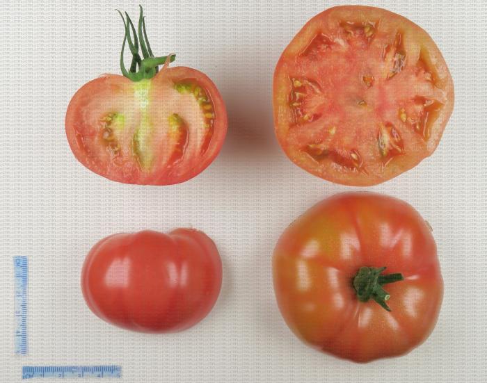 Variété de tomate de type ancien côtelé rose
