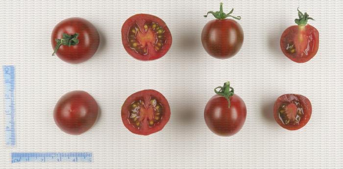 Tomates cerise de couleur marron zébré rouge