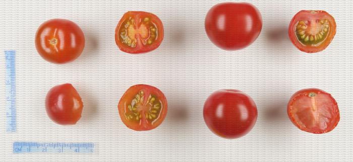 Tomates cerise de couleur rouge