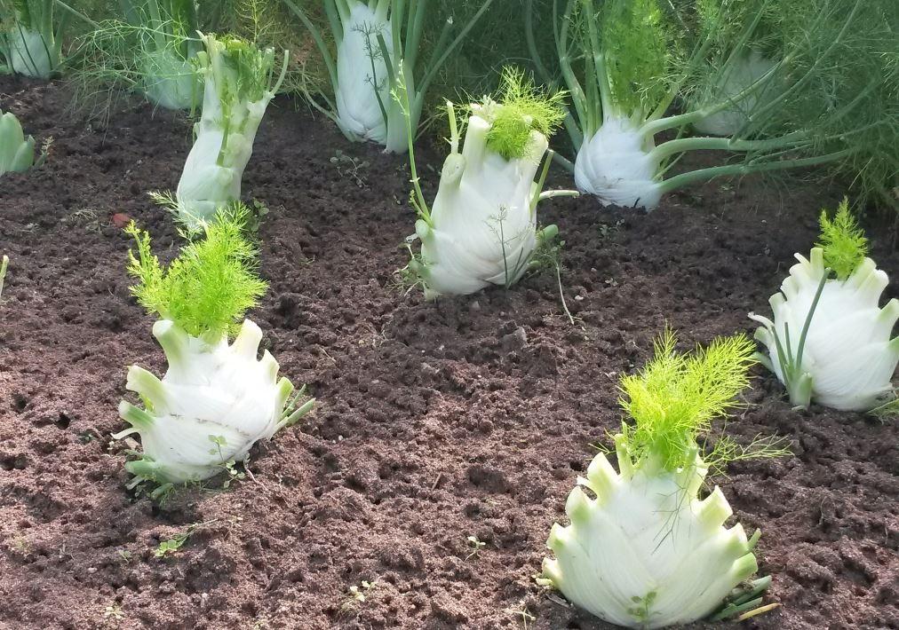 Légumes métropolitains autres